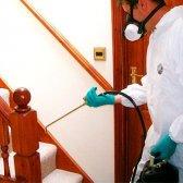 Як позбутися будинку від мурашок