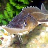 Яку рибу розводіті в ставку