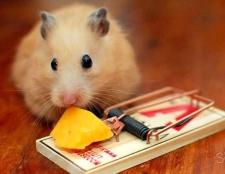 До чого сняться щурі