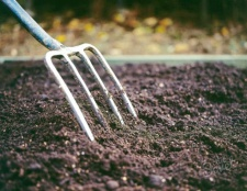 Як садити брокколі