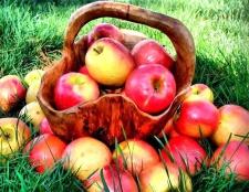 Як зробити вино з яблук