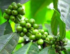 Зелена кава для схуднення - відгуки