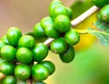 Зелена кава для схуднення - протипоказання